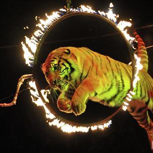 Цирки Фирово