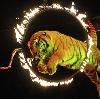 Цирки в Фирово