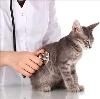Ветеринарные клиники в Фирово